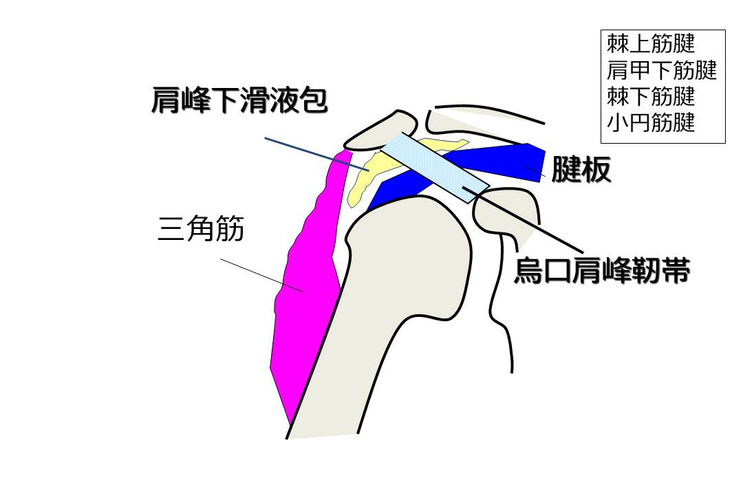 損傷 腱 治療 板